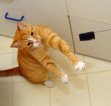 Cat Not Eating Urinary Diet