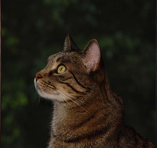 Carbohydrate Percentage In Cat Food