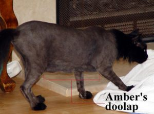 ambers-doolap-copy