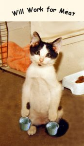 Andy - 18 years ago as a kitten