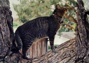 austin-in-tree-web
