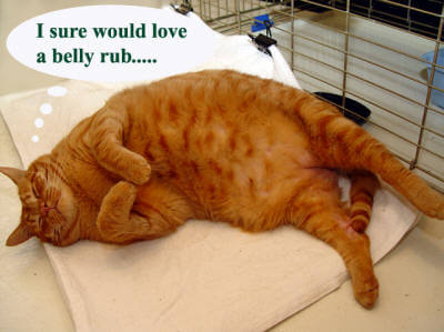 belly-rub-please-copy