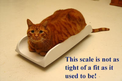bennie-fitting-on-scale-bette-copy