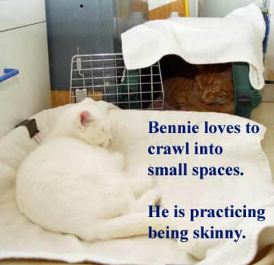 bennie-in-carrier-near-winnie-copy
