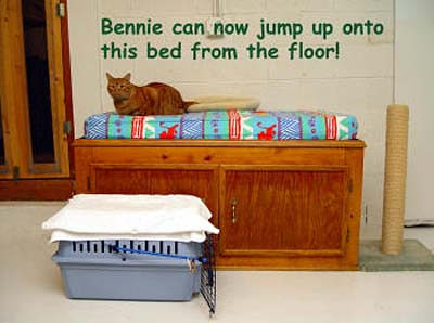 bennie-on-bed-12-11-07-copy