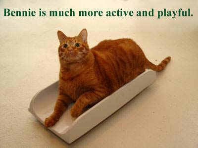 bennie-scale-playful-copy