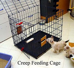 creep-cage-copy
