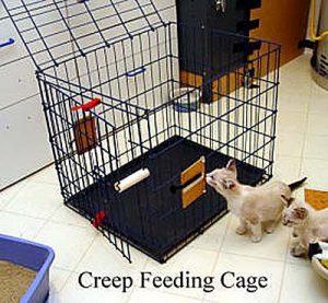 creep-cage-copy