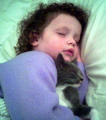 foster-kitten-sleeping-wit-copy