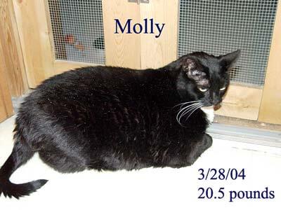 molly-20-5-lbs-copy
