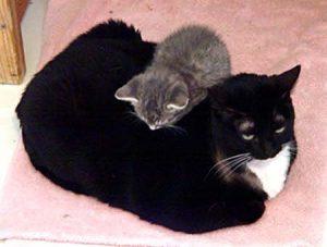 molly-kitten-on-back-1