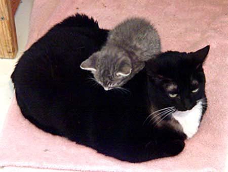 molly-kitten-on-back