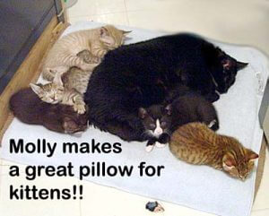 molly-and-kittens-copy-3
