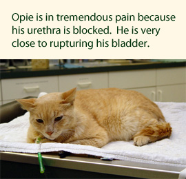 opie-1-table-270
