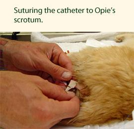 opie-3-suture-270