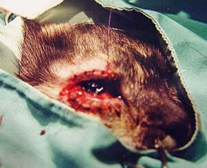 pita-surgery