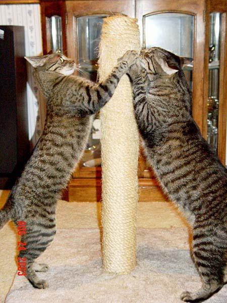 Feeding Your Cat Know The Basics Of Feline Nutrition Common Sense