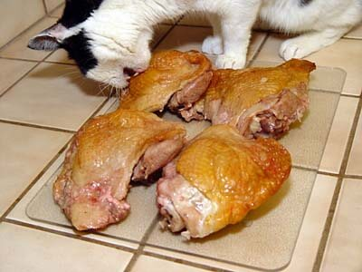Can You Feed Cats Raw Chicken