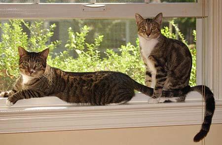 Wilson and Sidney-Beans Jablonski - my godchildren