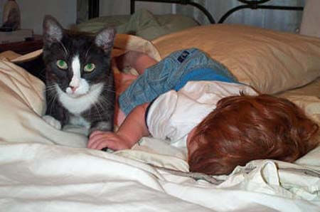 Vaccines for Cats: We Need to Stop Overvaccinating