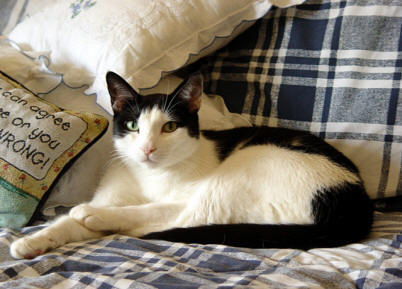 Toby - very lean, energetic and athletic on a proper diet. He is 18 years old and still runs around like a kitten.
